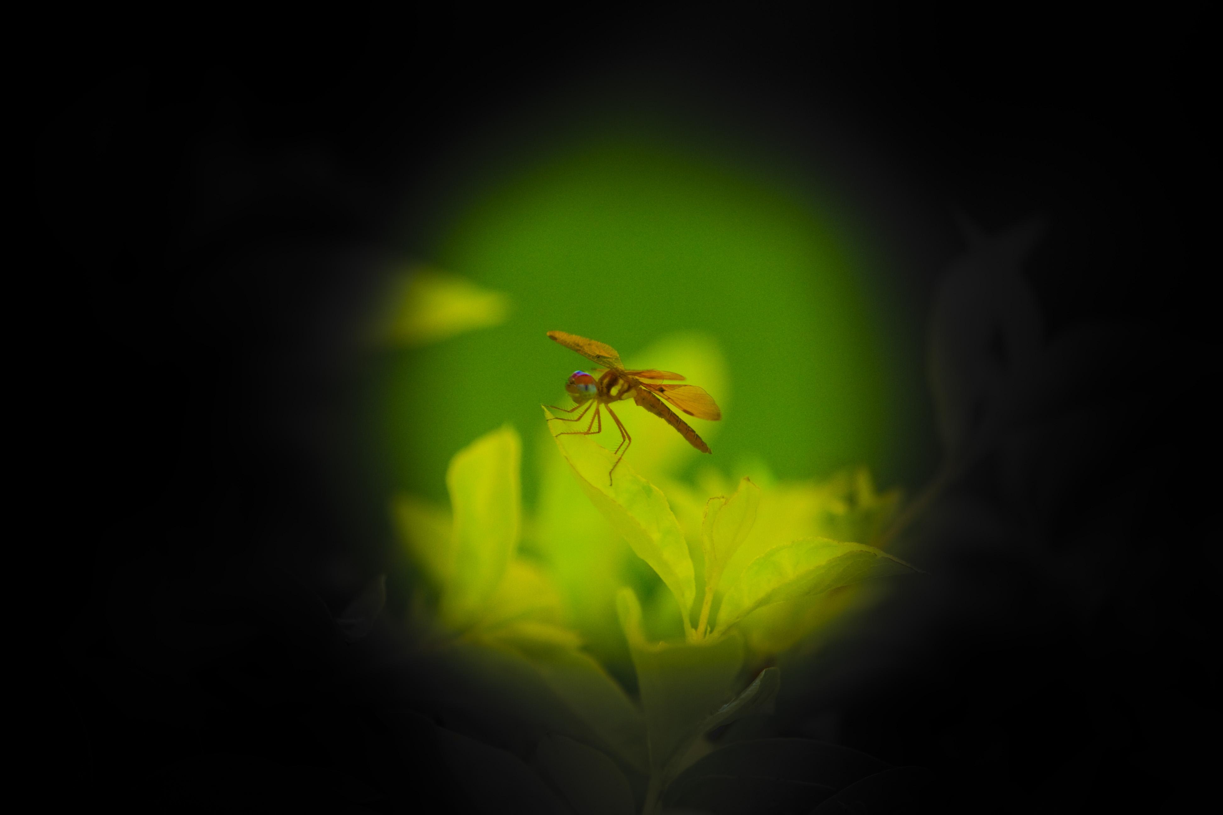 Bug View